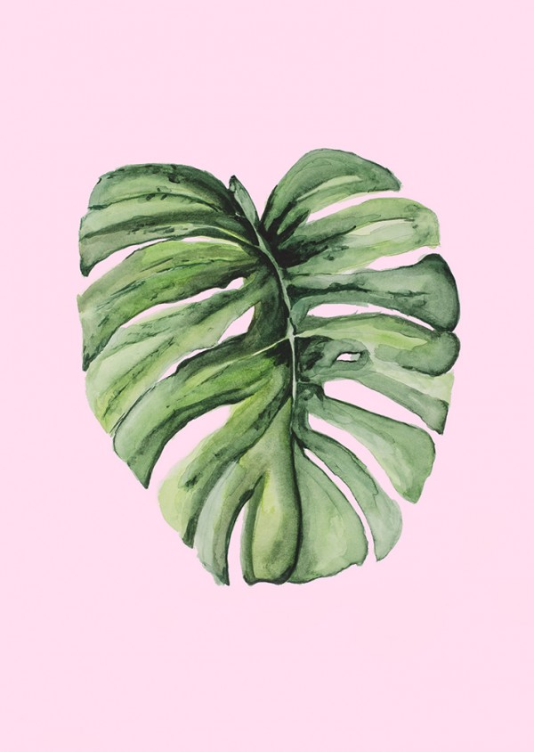 Monstera Leaf 201905